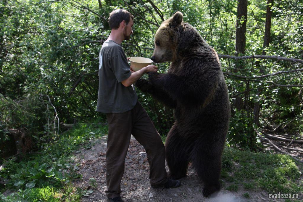 Centrul de reabilitare a puilor de urs orf | 1