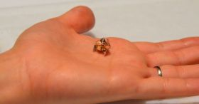 Miniature Origami Robot Self-folds, Walks, Swims, And Degrades