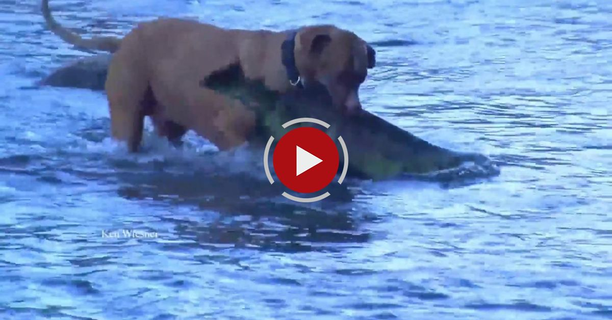 Dog's Fishing Catching HUGE Fish