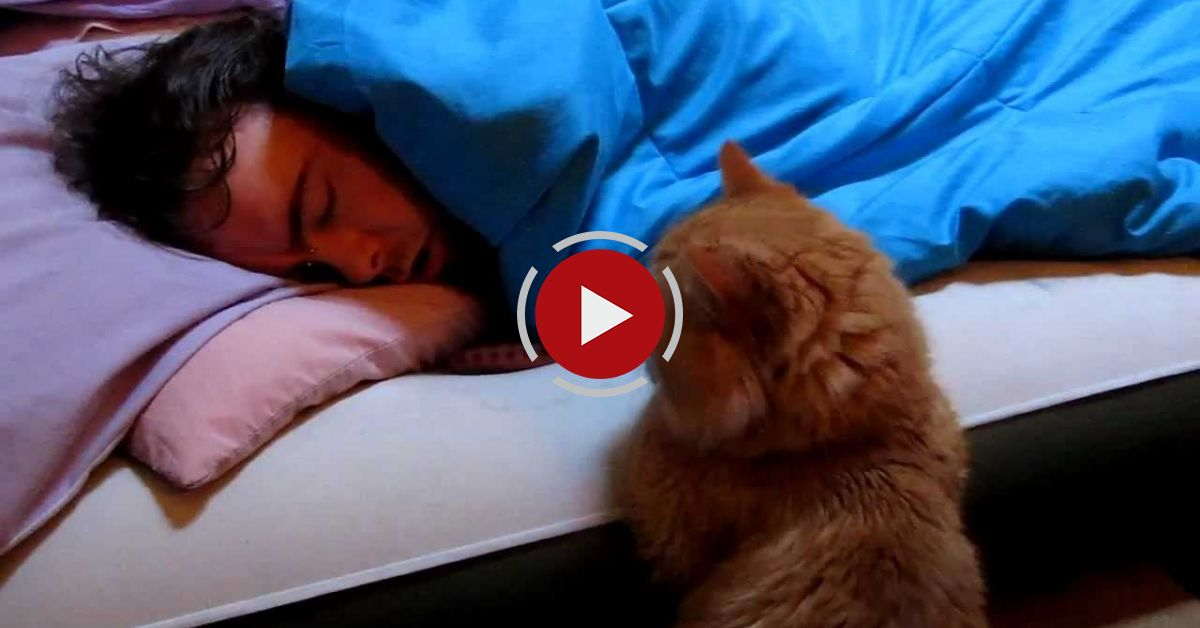 """Our Funny Cat: """"Why Won't He Wake Up To Play With Me?"""""""