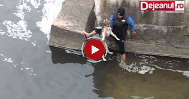 Dog Expresses His Happiness And Gratitude After Being Rescued