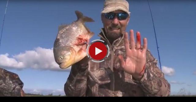 Piranha Bites Finger