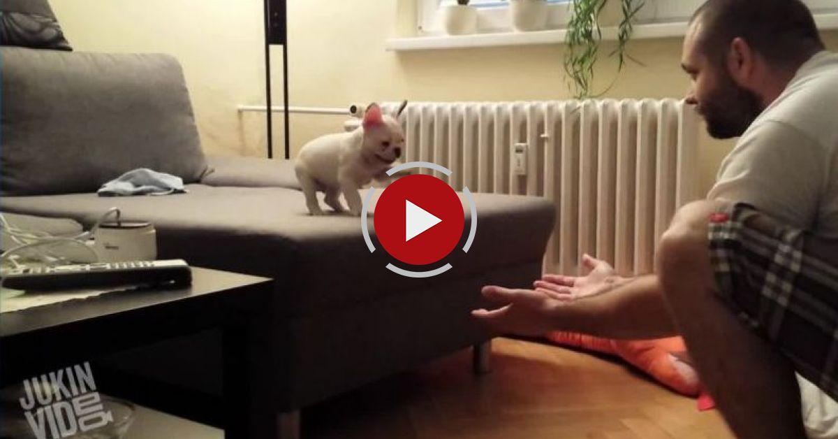 Top 5 Puppies || Cuteness Overload