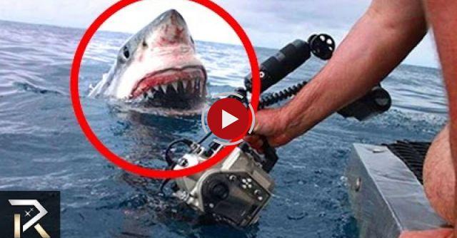 10 Shocking Attacks Caught On Camera