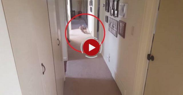 Funny Corgi Dog Goes Crazy Over SHOWERS