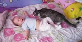 A baby is crying desperately - Just watch what the cat does!